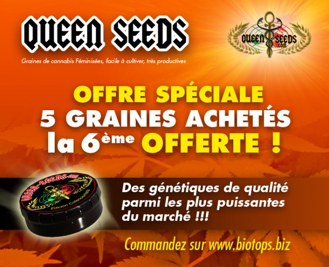 pub-queen-seed