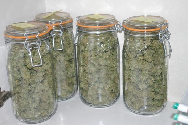 bocal cnnabis