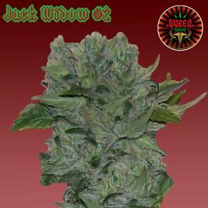 jack widow 2