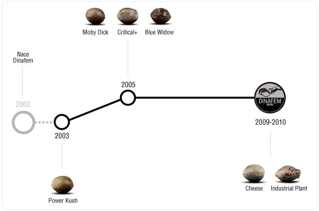 timeline dinafem