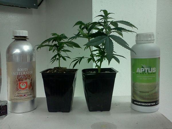 Différence entre Aptus et autre engrais