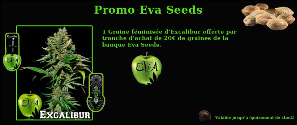 promo eva seed