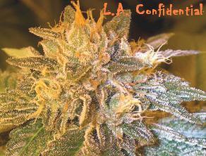 La L.A Confidential  O.G L.A Affie