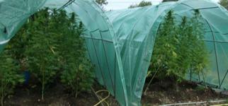 Forcer la floraison de votre cannabis en ext rieur for Engrais floraison cannabis exterieur
