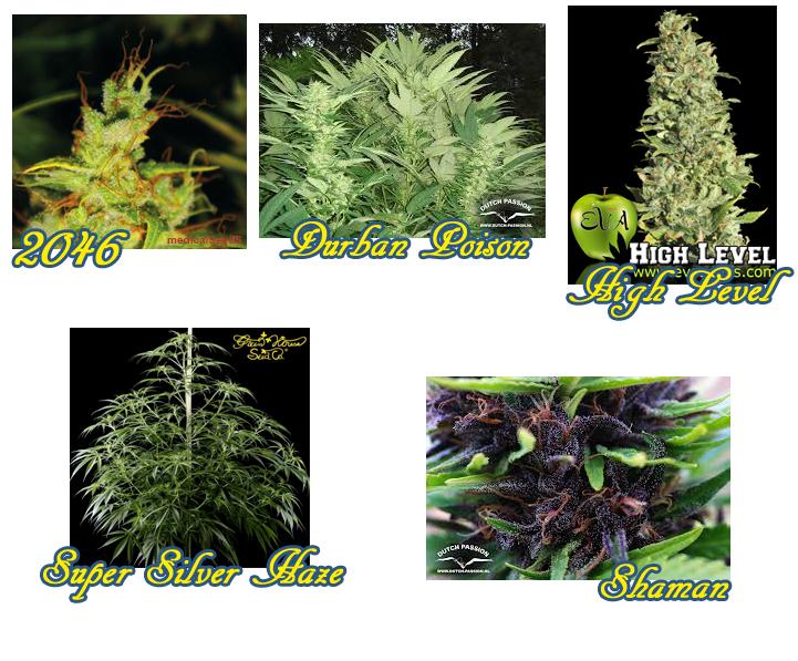 Voici quelques photos des variétés ci-dessus