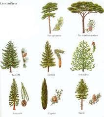 alpha pinede biotops