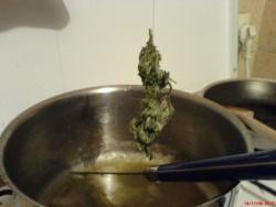 Une tete de cannabis pour faire du beurre
