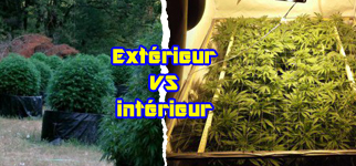 Culture intérieur ou extérieur, comment choisir ? • Biotops.BIZ