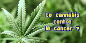 Le cannabis pour lutter contre le cancer