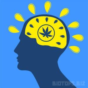 Les effets du cannabis sur certaines maladies