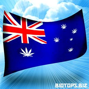 nouvelle espèce de cannabis