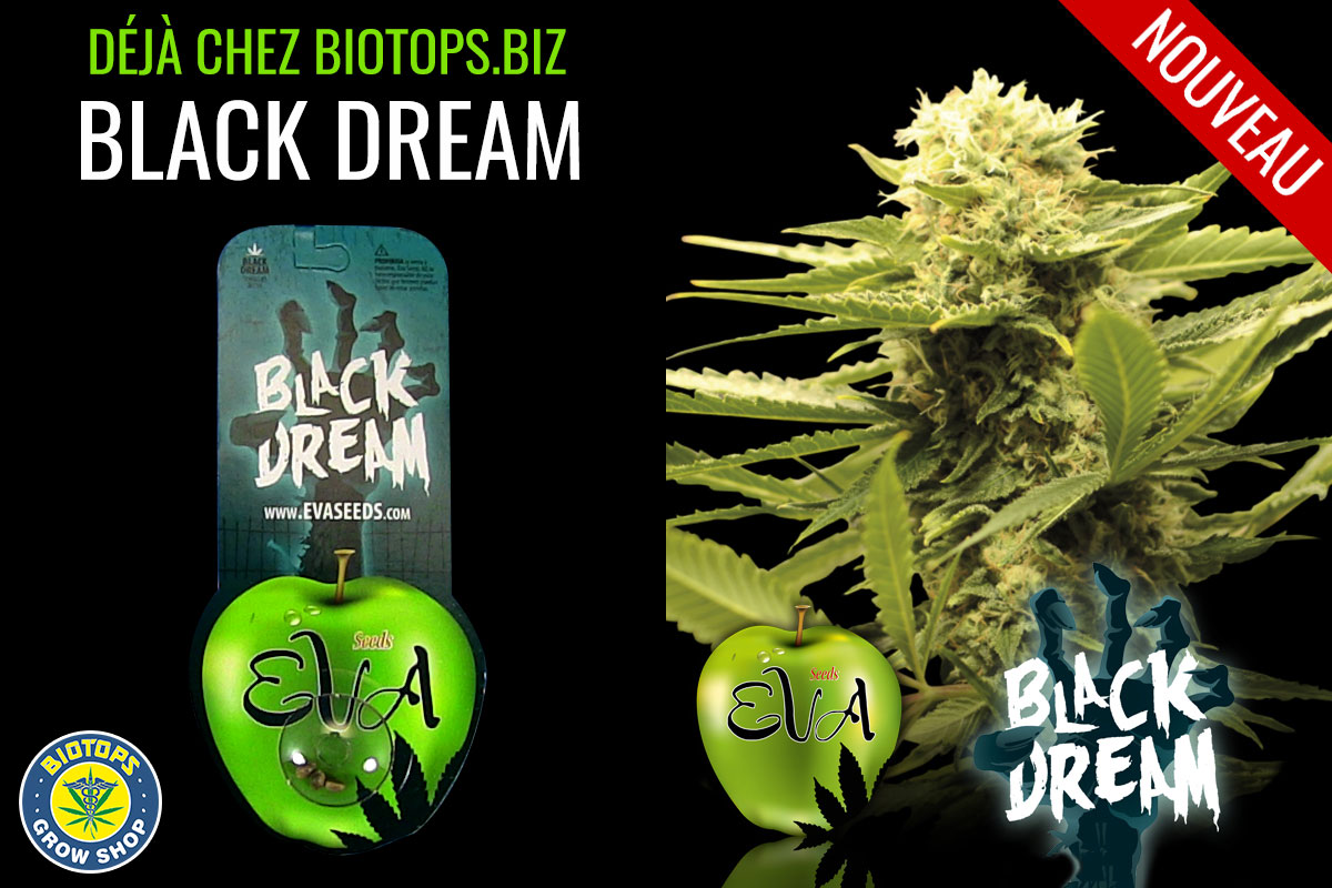 black dream disponible chez biotops.biz