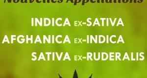 Image des nouvelles appellations du cannabis