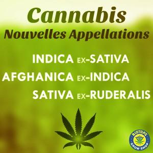 Sativa Indica Ruderalis nouvelles appellations du cannabis