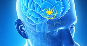 Les effets du cannabis sur le cerveau