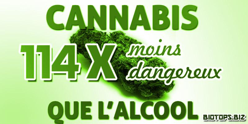 Une etude sur le cannabis et l'alcool