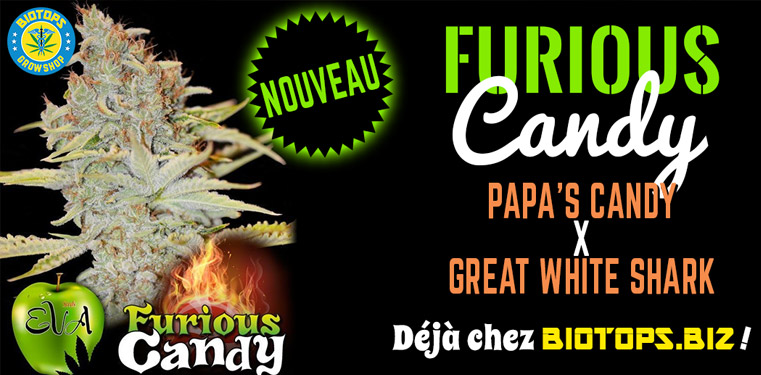 Furious Candy disponible chez Biotops.biz