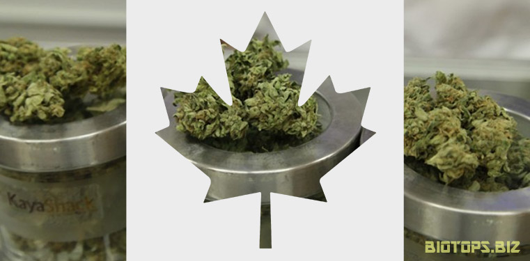 autorisation cannabis medical Canada