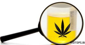 Duree du cannabis dans le corps