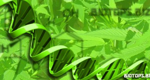Laboratoire d'analyses du cannabis, tester l'adn du cannabis