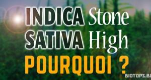 Indica stone / sativa- high - Pourquoi ?