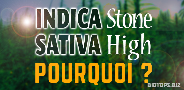 Indica stone / sativa- high - Pourquoi ?