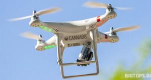 Livraison de cannabis par drone