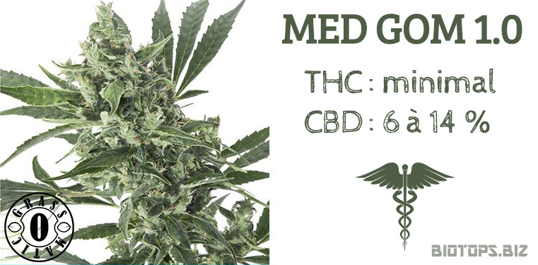 Med Gom 1.0, graine de cannabis faible en THC forte en CBD