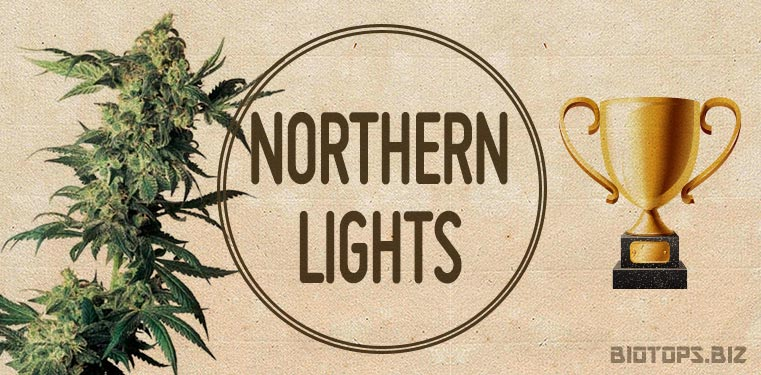 northern-lights-graines-de-cannabis