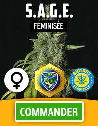 S.A.G.E. graine de cannabis féminisée