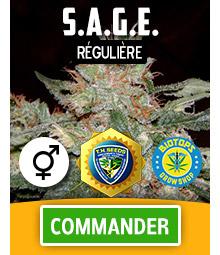 S.A.G.E. graine de cannabis régulière