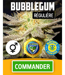 bubblegum-graine-de-cannabis-reguliere