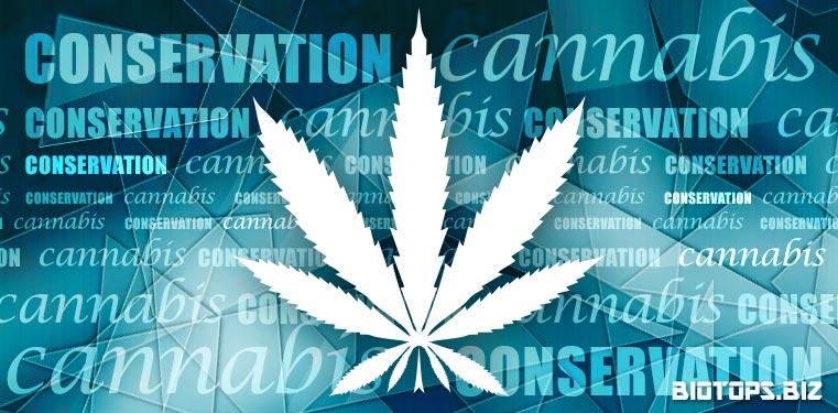 conservation du cannabis