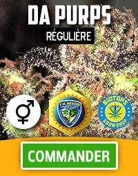 Da Purps, graine de cannabis régulière