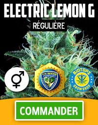 Electric Lemon G graine de cannabis régulière