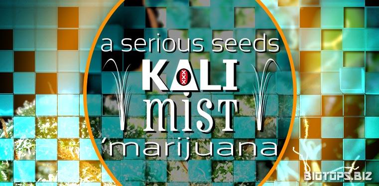 Kali Mist graine de cannabis de chez Serious Seeds