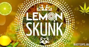 Lemon Skunk de Green House Seeds