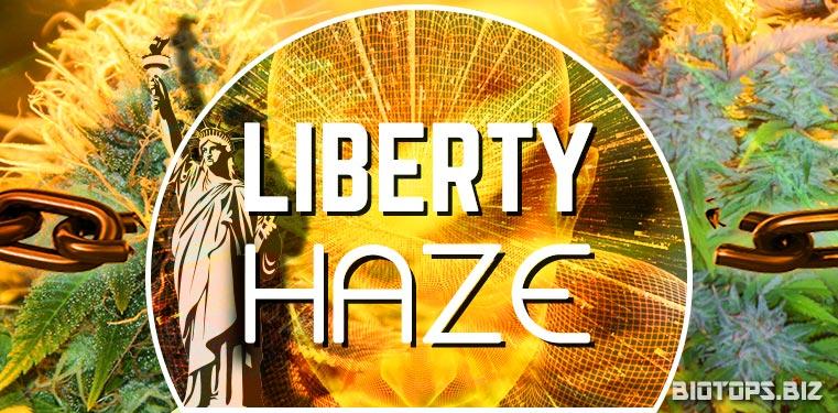 Tout sur la Liberty Haze de Barney's Farm