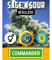 Sage'n Sour graine de cannabis régulière