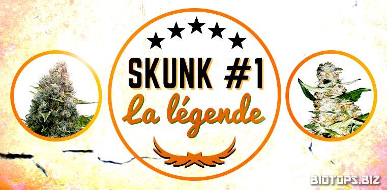 Skunk #1 graine de cannabis
