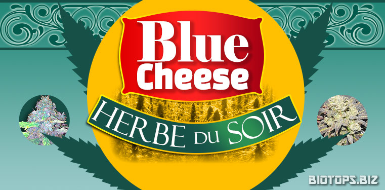 Blue Cheese de Barney's Farm : herbe du soir