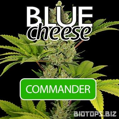 Blue Cheese de Barney's Farm en vente chez Biotops.BIZ