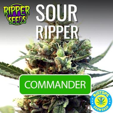 Sour Ripper, graine de cannabis en vente chez Biotops.BIZ