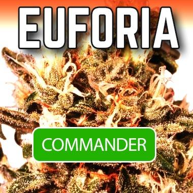 Euforia graine de cannabis en vente chez Biotops.BIZ