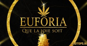 Euforia graine de cannabis de Dutch Passion