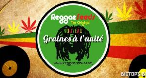 Reggae Seeds : graines de cannabis à l'unité