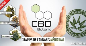 CBD Botanic, banque de graines de cannabis médicinal
