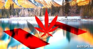Légalisation du cannabis au Canada