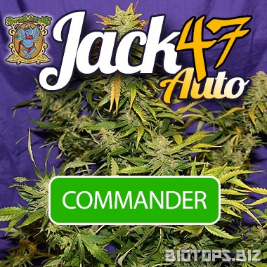 Jack 47 Auto de Sweet Seeds disponible chez Biotops.BIZ