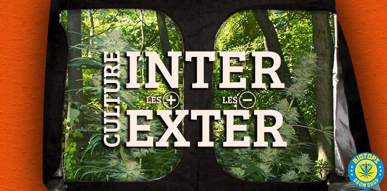 Culture du cannabis en int rieur ou en ext rieur for Kit culture cannabis interieur
